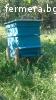 пчелни семейства с кошери