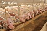 Купувам свинеферма