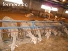 Продавам овце - Лакон