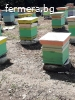 Продавам пчелни семейства